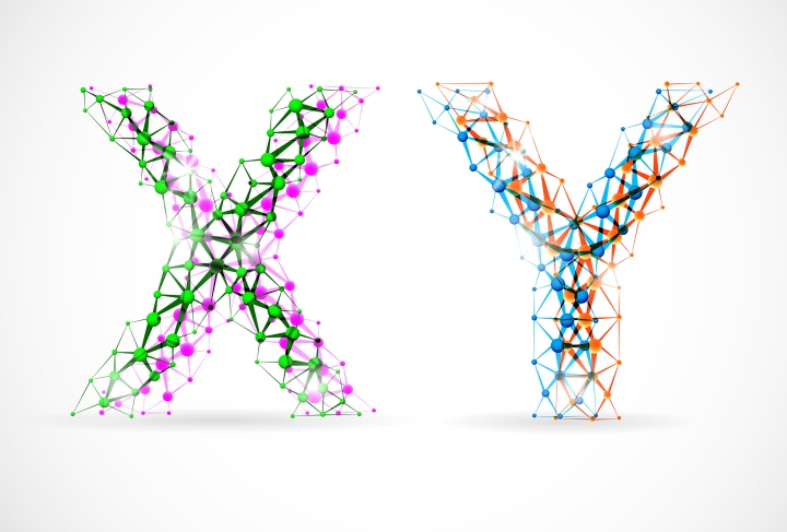 X and Y chromosomes